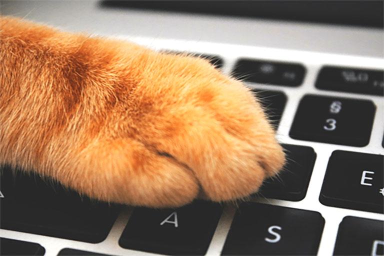 Cat Tool Lionspeech